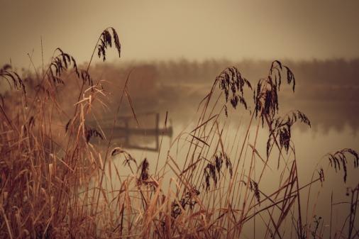 nebel-187