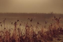 nebel-189