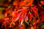 Sonnenaufgang_November_AltesLand_Mittelnkirchen_Apfelplantagen_Naturfotografie_stadefotograf.de (33)